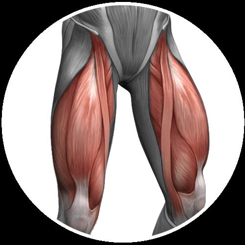 Esercizi allenamento quadricipiti e gambe