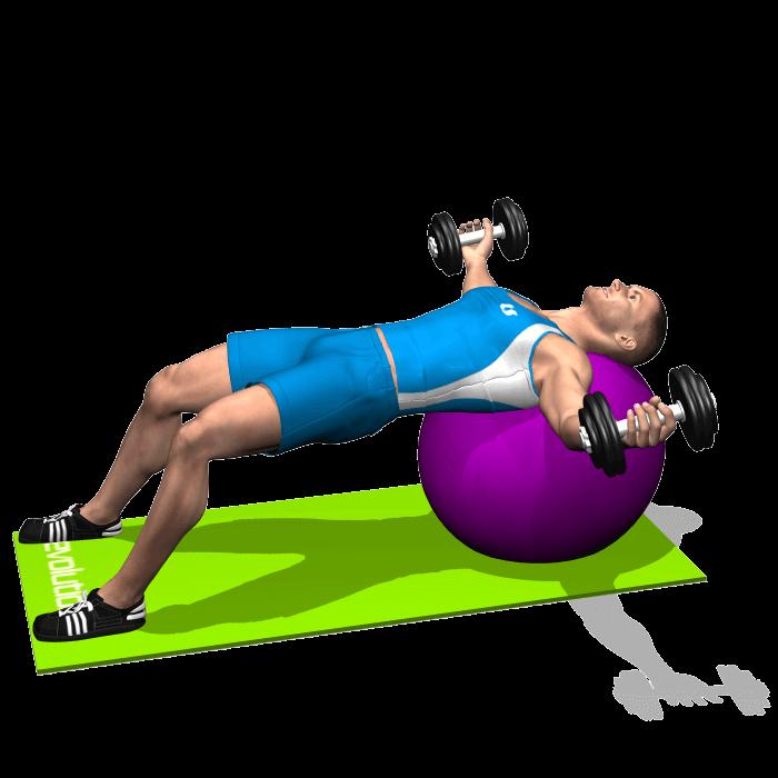allenamento spalle aperture manubri stability ball fine