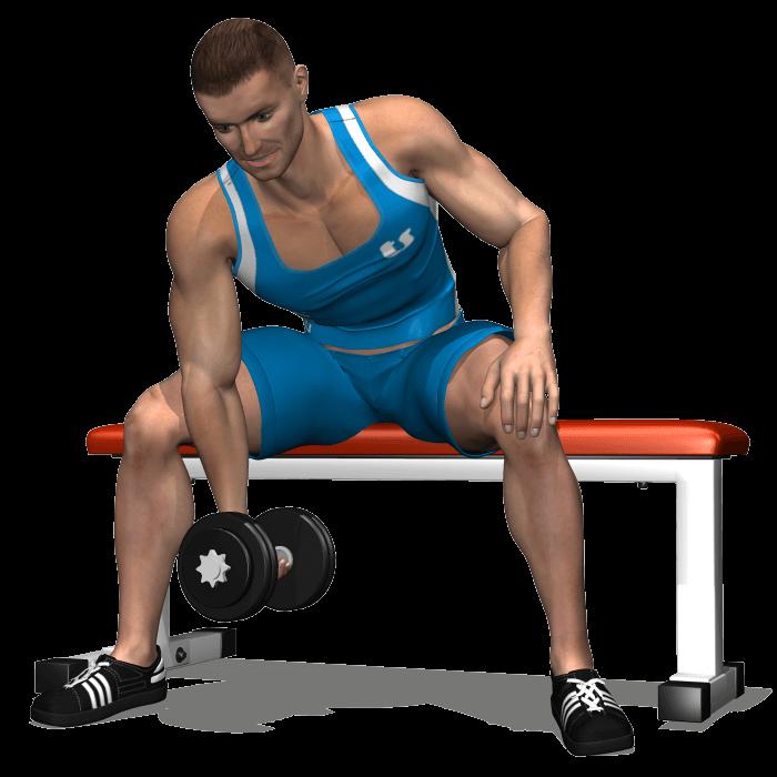 allenamento bicipiti concentrato manubrio seduto, inizio
