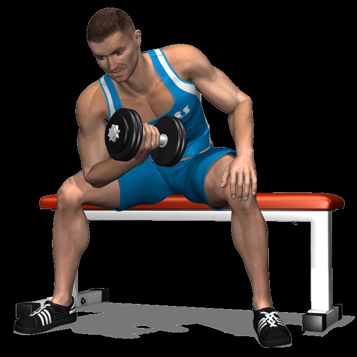 allenamento bicipiti concentrato manubrio seduto, fine