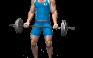 allenamento bicipiti curl bilancieri in piedi fine