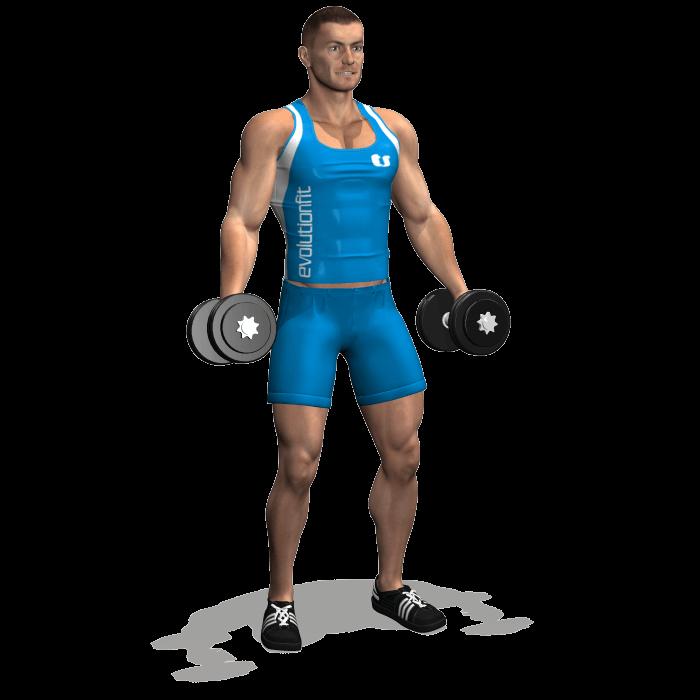 curl manubri alternato per allenamento bicipiti posizione iniziale