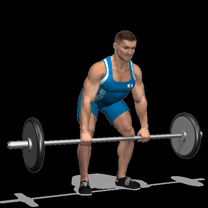 allenamento dorsali rematore bilanciere inizio