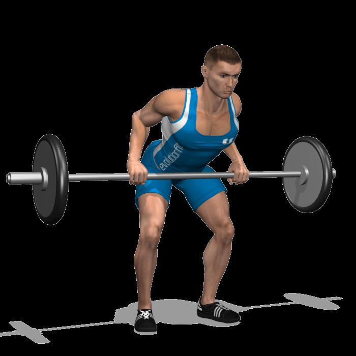 allenamento dorsali rematore bilanciere fine