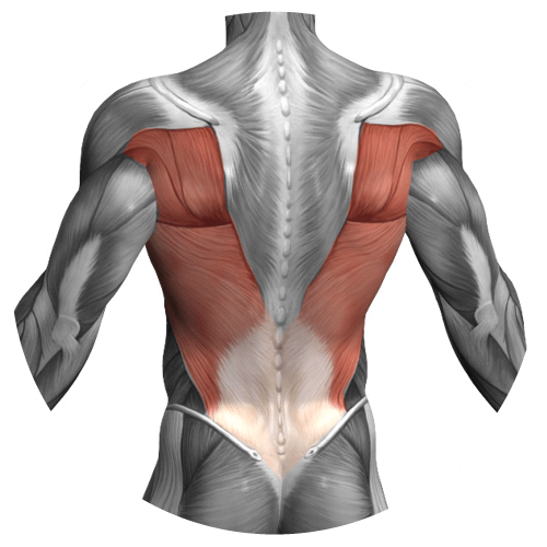 Esercizi allenamento dorsali e schiena