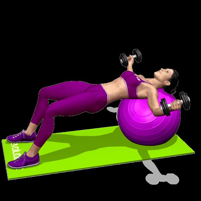 Software schede palestra e app allenamento evolutionfit for Maschile e femminile esercizi