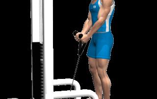hammer curl cavi corda per allenare i bicipiti, fine