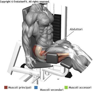 mappa muscolari abduttori aperture abductor machine
