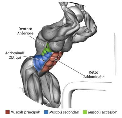 mappa muscolare addominali crunch ai cavi