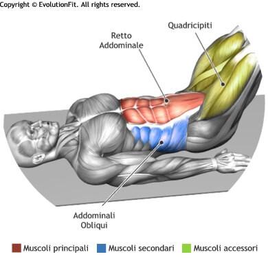 mappa muscolare addominali leg raise