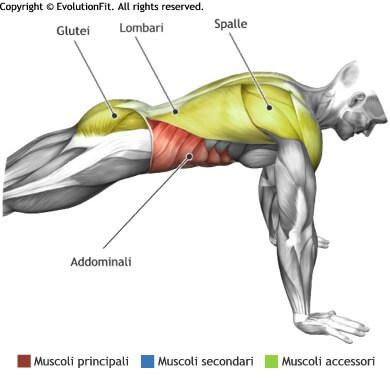mappa muscolare addominali plank braccia tese