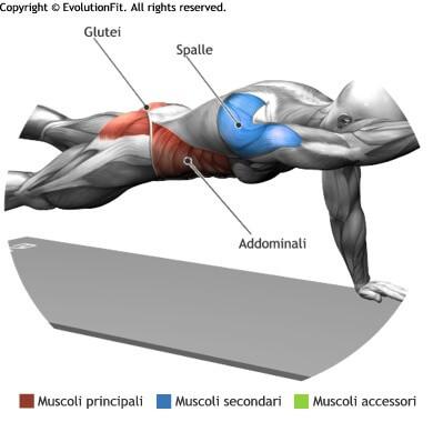 mappa muscolare addominali plank superman