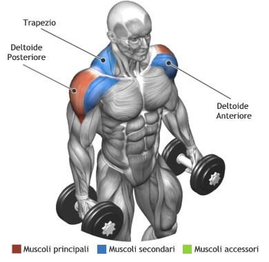mappa muscolare spalle alzate laterali piedi