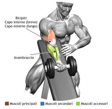 muscoli allenati bicipiti curl concentrato panca alta