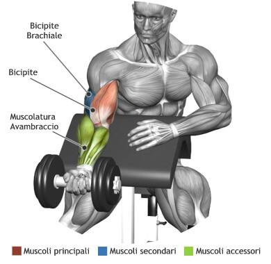 mappa muscoli bicipiti curl scott manbrio
