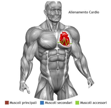 mappa muscolare cardio rowing
