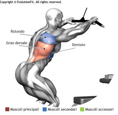 mappa muscolare dorsali chiusure pull down lat machine