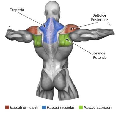 mappa muscolare crossover cavi alti