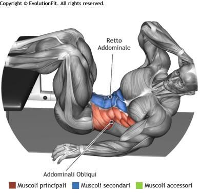 mappa muscolare crunch obliqui a terra gambe su panca
