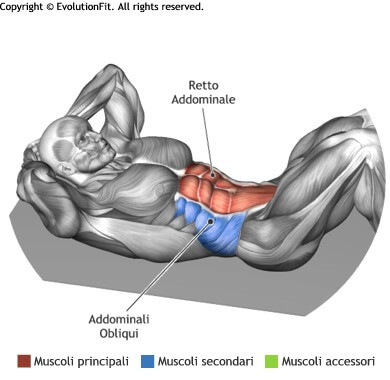 mappa muscolare ddominali crunch a terra