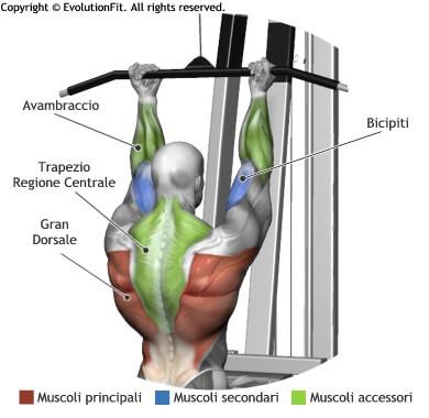 mappa muscolare dorsali lat machine inverso