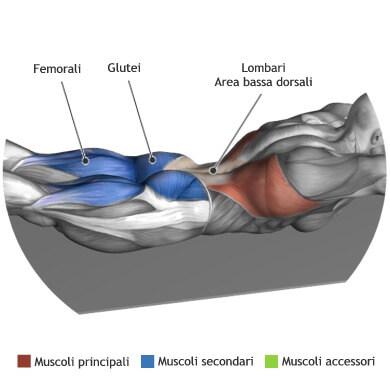 mappa muscolare dorsali lombari a terra