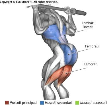 mappa muscolare femorali good morning