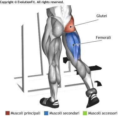 mappa muscolare glutei slanci posteriori gamba piedi
