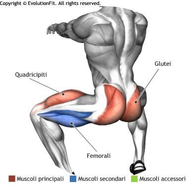 mappa muscolare glutei sumo squat corpo libero