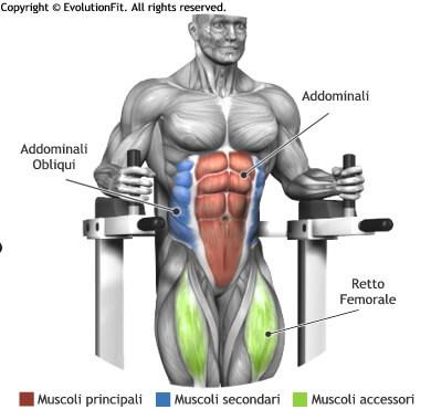 mappa muscolare addominali alzate gambe 90 alle parallele
