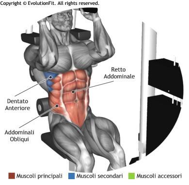 mappa muscolare addominali chiusure abdominal machine