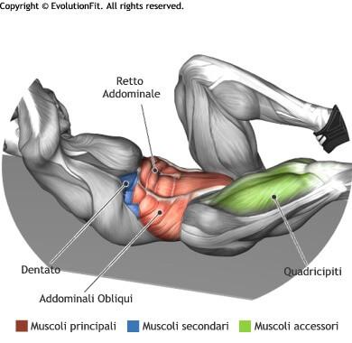 mappa muscolare addominali criss cross a terra