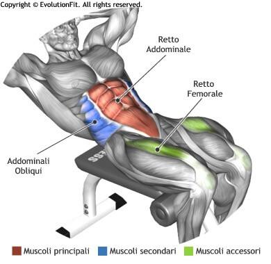 mappa muscolare addominali crunch panca romana