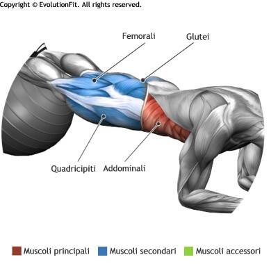 mappa muscolare addominali plank gambe su fitball