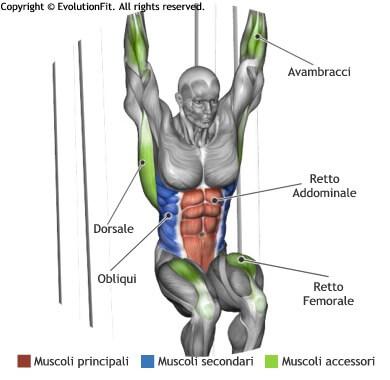 mappa muscolare addominali sollevamenti gambe 90 alla sbarra