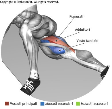 mappa muscolare adduttori alzate gamba interna sdraiato