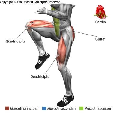 mappa muscolare cardio skip alto