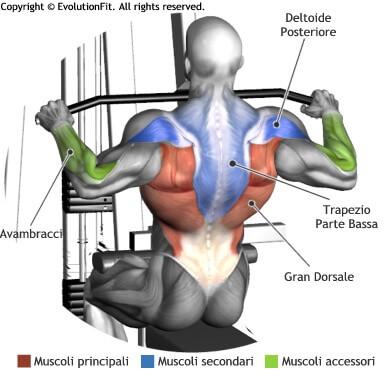 mappa muscolare dorsali lat machine avanti