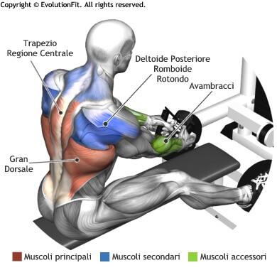mappa muscolare dorsali pulley basso