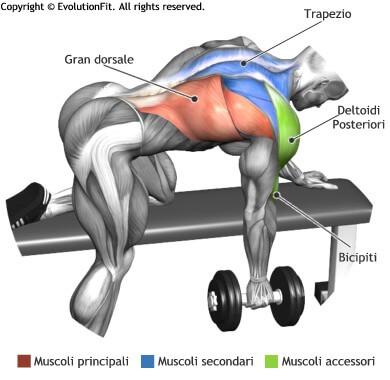mappa muscolare dorsali rematore 1 manubrio panca piana