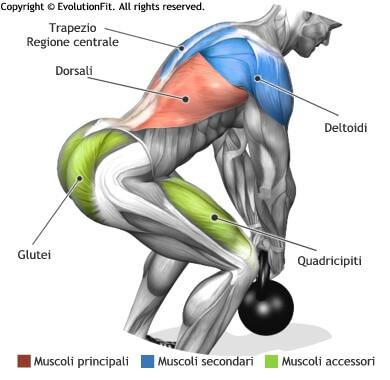 mappa muscolare dorsali stacchi 1 kettlebell