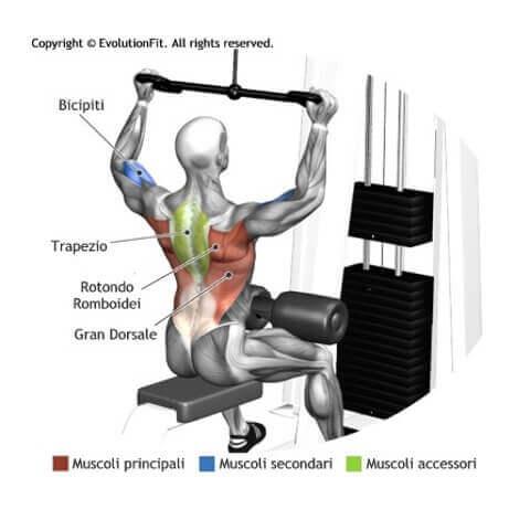 muscoli coinvolti esercizi evolutionfit