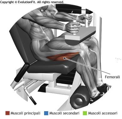 mappa muscolare femorali leg curl seduto