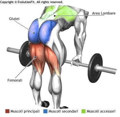 mappa muscolare femorali stacchi a gambe tese bilanciere
