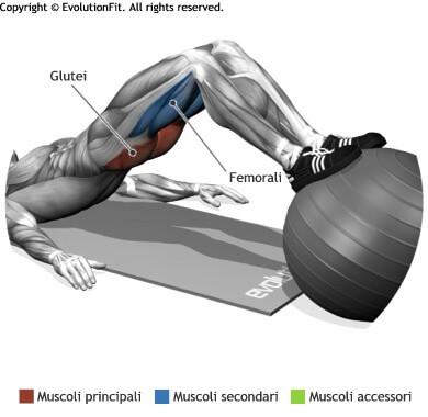 mappa muscolare glutei bridge piedi su fitball