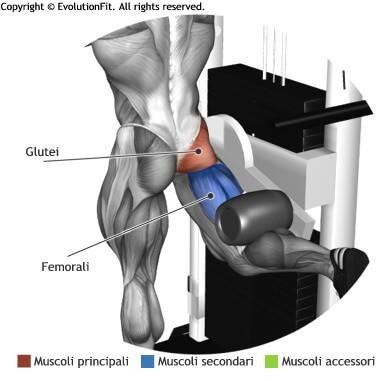 mappa muscolare glutei slanci posteriori multi hip