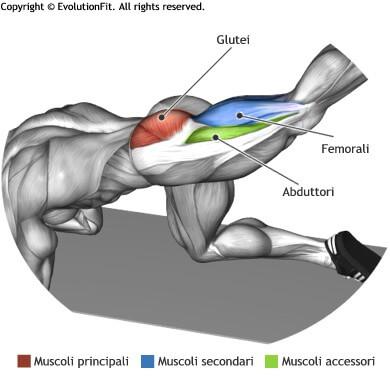 mappa muscolare glutei slanci prono in alto gamba tesa