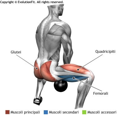 mappa muscolare glutei sumo squat kettlebell
