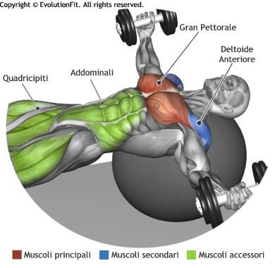 mappa muscolare pettorali aperture manubri fit ball
