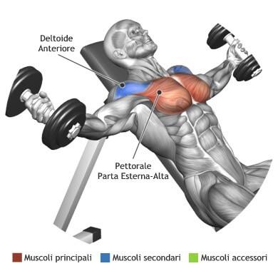 muscoli utilizzati per aperture panca alta 2 manubri